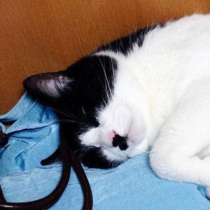 300カバンを枕に寝る猫.jpg