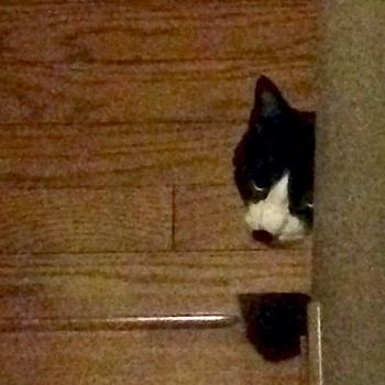 350階段の下からのぞく猫2.jpg