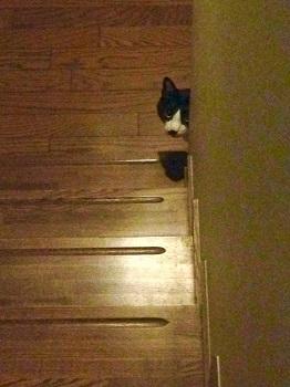 350階段の下からのぞく猫1.jpg