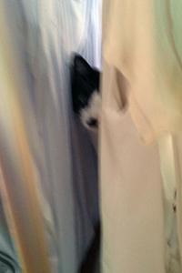 いたずら猫が洗濯物の隙間から 01 遊ぶ?.jpg