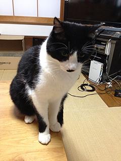 エアプランツ 恨めしげな猫.jpg