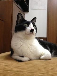 トールサイズ猫 音がした!.JPG