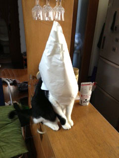 三角帽子をかぶった猫-1.jpg