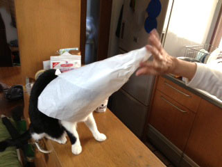 三角帽子をかぶった猫 お母さんにかぶせられた-1.jpg