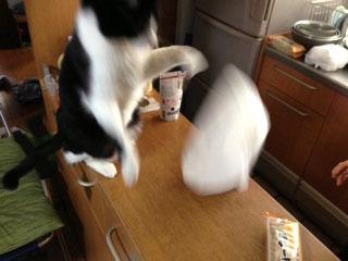 三角帽子をかぶった猫 叩き落とした-1.jpg
