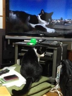 岩合光昭 そっくりな猫 横顔.JPG