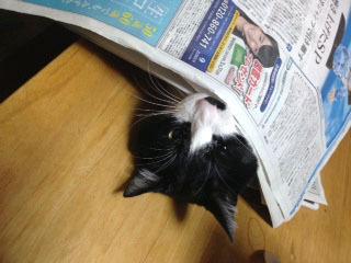 新聞の邪魔C 反抗的な気持ちになる-1.jpg