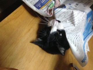 新聞の邪魔C 怒って噛む-1.jpg