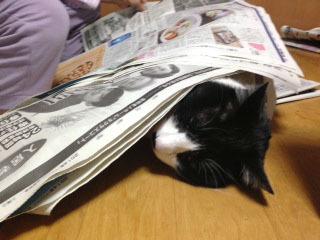 新聞の邪魔C 目を閉じて寝る-1.jpg