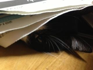 新聞の邪魔D ちらっと見る.JPG
