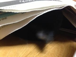 新聞の邪魔D 顔を隠す.JPG