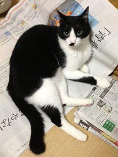 新聞は読ませない-1.jpg