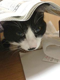 新聞下に潜入する猫 1 クローズアップ-1.jpg