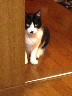 様子を見る猫 キラーン-1.jpg
