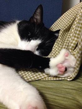 爪を引っ掛けたまま寝てたけど目覚めた猫.jpg