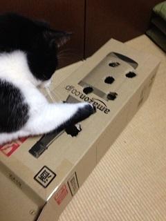 猫のモグラたたき030手を突っ込んだ.jpg