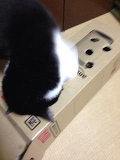 猫のモグラたたき070もう一度肩まで入れる.jpg