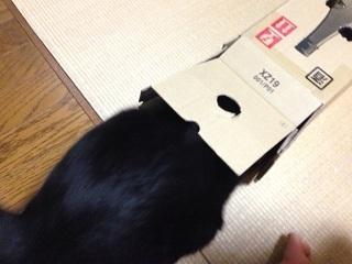 猫のモグラたたき170中を覗くが.jpg