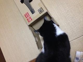 猫のモグラたたき190入り口が閉じてしまった.jpg
