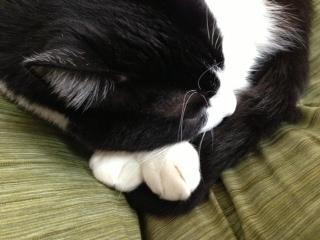 猫の手 アップ.JPG