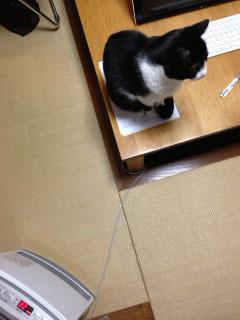 猫ポジション.JPG