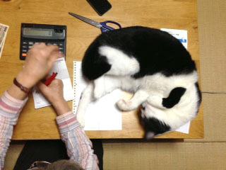 猫ポジション けりけり-1.jpg