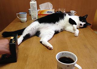 珈琲が嫌いな猫01.jpg