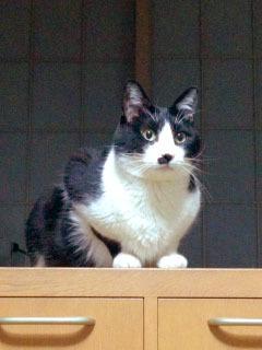 真面目な猫-1.jpg