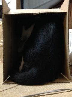 箱 後ろ向き-1.jpg