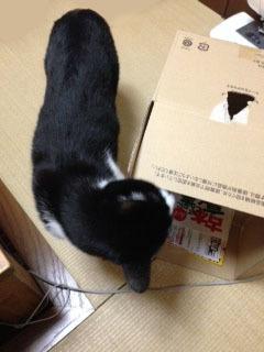 箱 見つけた-1.jpg