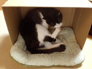 衝立 猫がゴキゲンで爪の手入れ-1.jpg