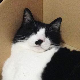 酔っ払い猫04.jpg