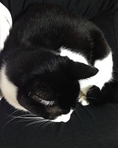 黒白の猫と黒白の人間 01 わかりにくい.jpg