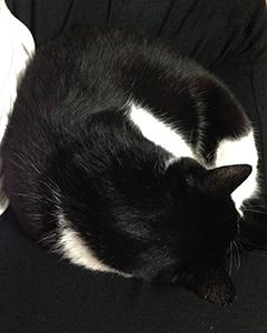 黒白の猫と黒白の人間 02 ますますわからない.jpg