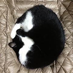 鼻を隠して寝る猫 01基本形.jpg