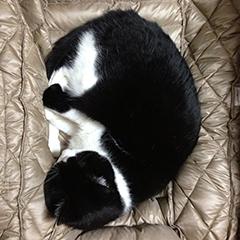 鼻を隠して寝る猫 02少しほぐれた.jpg